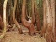 Horse Trees - Brighton, Ontario Canada