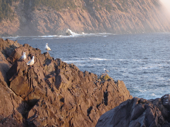 Good Morning from the East Coast Logy Bay-Middle Cove-Outer Cove, Newfoundland and Labrador Canada