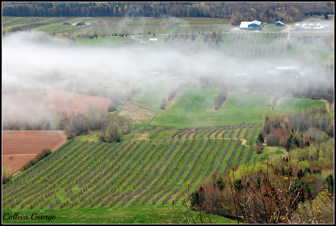 Fog Over the Valley Canning, Nova Scotia Canada