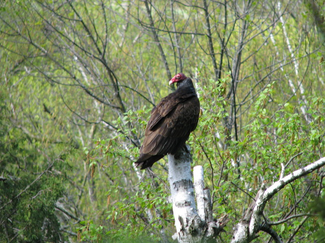 Hiking Bruce Trail - Vulture Milton, Ontario Canada
