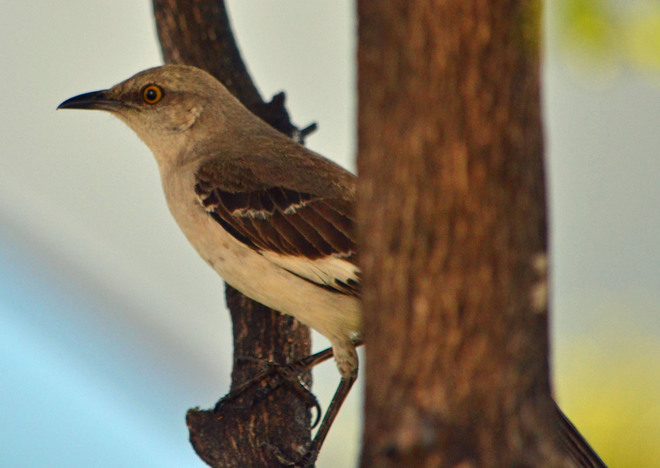 Mockingbird Miami Beach, Florida United States