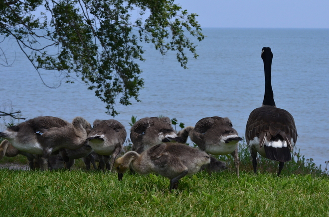 ONE BIG FAMILY Burlington, Ontario Canada