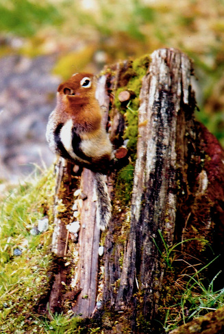 Baby Squirrel Capilano 5, British Columbia Canada
