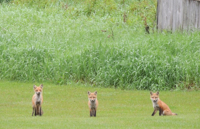 Foxes Den Northbrook, Ontario Canada