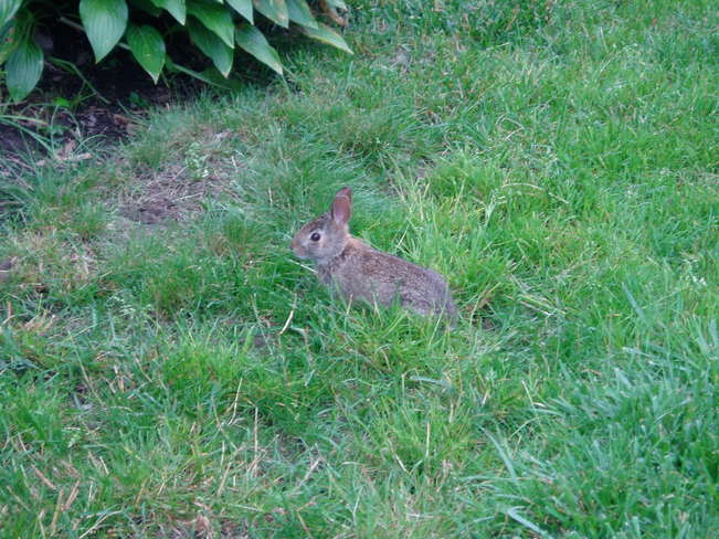 Little Bunny having lunch Kitchener, Ontario Canada