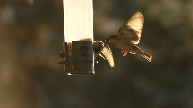 In flight meal Brantford, Ontario Canada