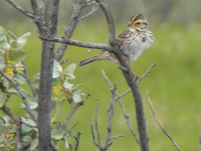 lovely little bird at nose hill park Calgary, Alberta Canada