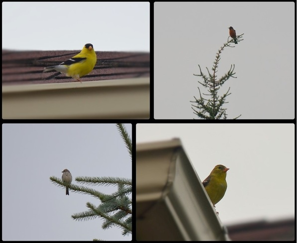 Morning birds Barrie, Ontario Canada