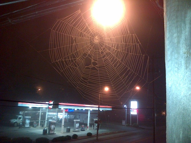 A spiders web in the Fog Grimsby, Ontario Canada