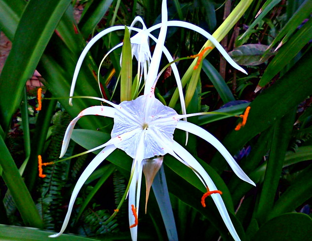 ornate flower at our resort Negril, Westmoreland Jamaica