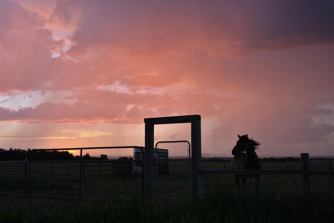 Horse at sunset in a shower Tofield, Alberta Canada