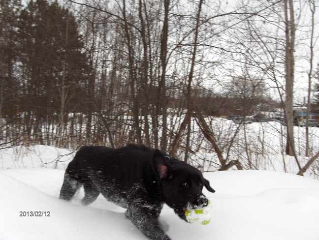Tessa Playing With Her Toy Massey, Ontario Canada