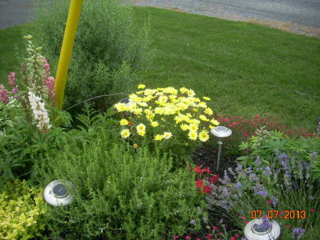 Lush garden without watering! St. Isidore, Ontario Canada