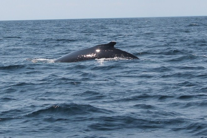 whale watching in Twillingate, NL Grand Falls, Newfoundland and Labrador Canada