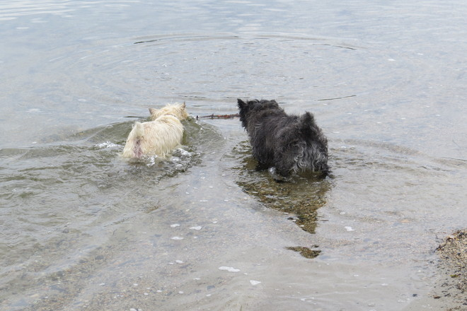 Widget & Skyelar Knee Deep!!! Chester, Nova Scotia Canada