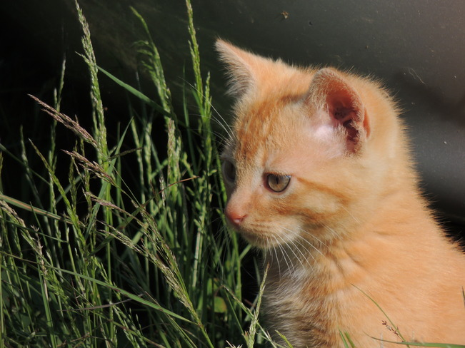 Beautiful kitten Indian Bay, Newfoundland and Labrador Canada