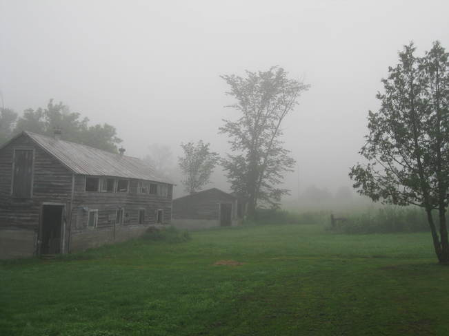 Misty Morning Yarker, Ontario Canada