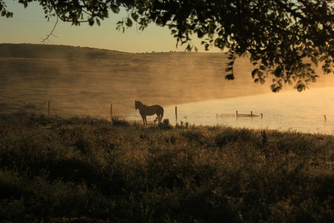 early morning Fog Maple Creek, Saskatchewan Canada