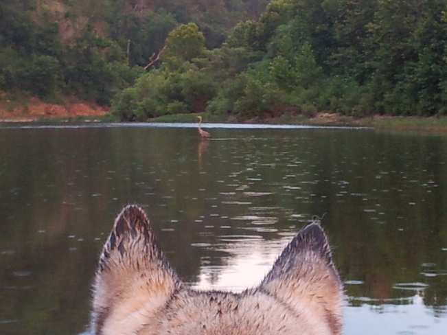 Kyra eyeing the Heron Harrison, Arkansas United States