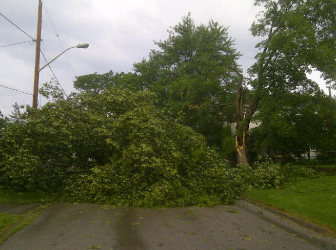 Tree down on South Street St. George, Ontario Canada