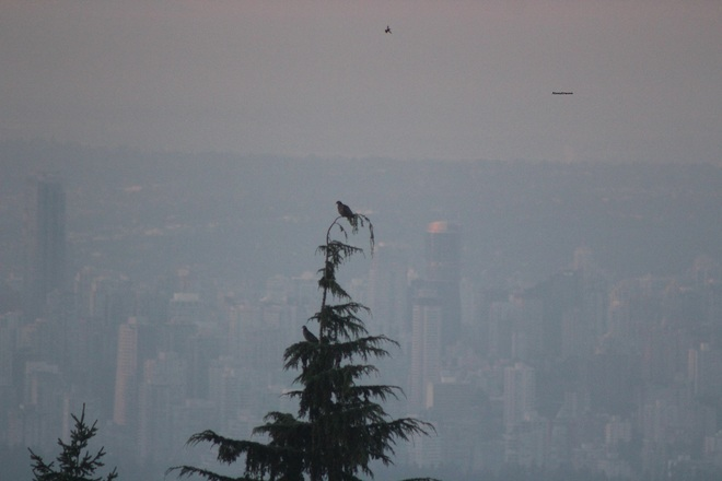 Romantic Doves Overlooking Sunrise West Vancouver, British Columbia Canada