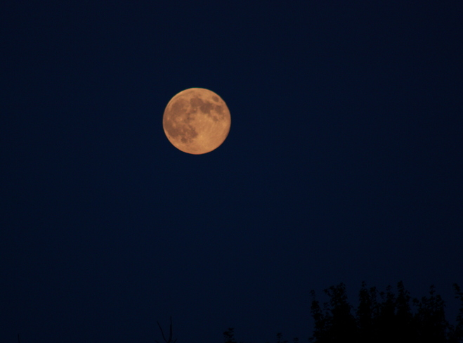 Orange full moon Tracy, New Brunswick Canada