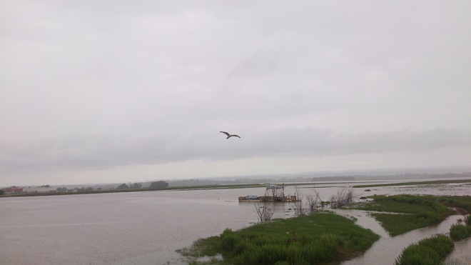 Mr. Seagull likes the Raining High Tide in Wolfville, Nova Scotia. Wolfville, Nova Scotia Canada