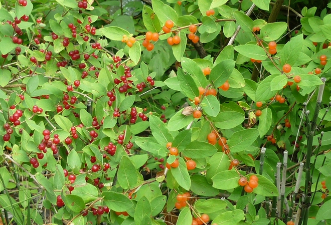 Lots of Berries Orillia, Ontario Canada