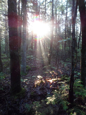 Woods Morning Oromocto, New Brunswick Canada
