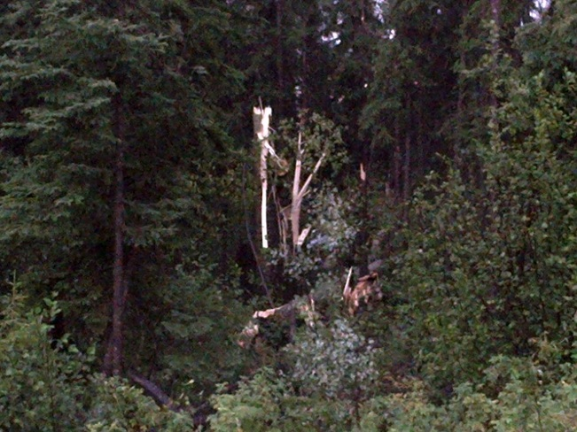 Trees Uprooted and Snapped in Two Like Toothpicks