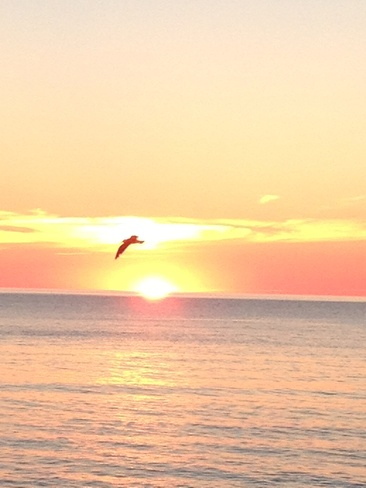sunset with a seagul Margaree, Nova Scotia Canada