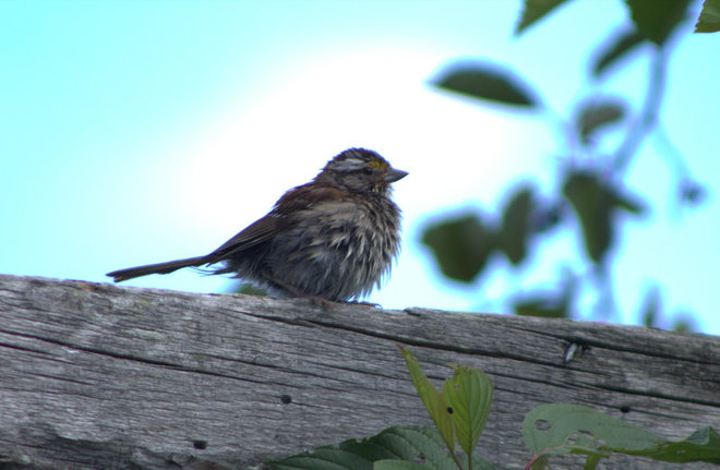 """cute fluffy bird"" Timmins, Ontario Canada"