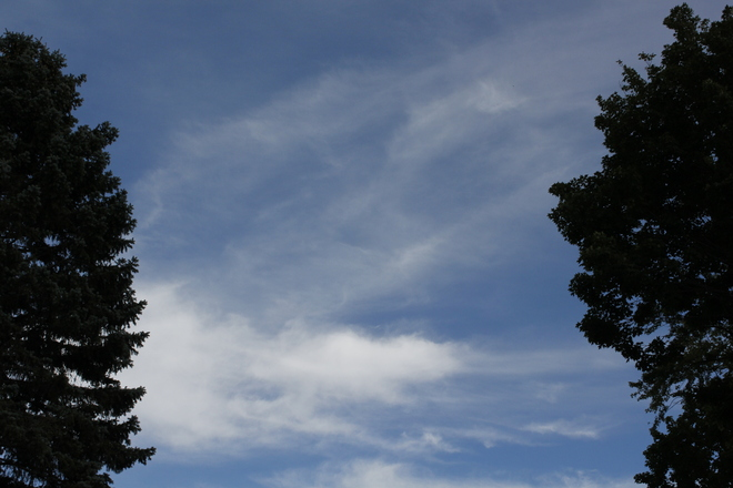 Cirrus and Trees