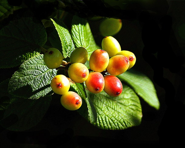 Wild Berries Scarborough, Ontario Canada