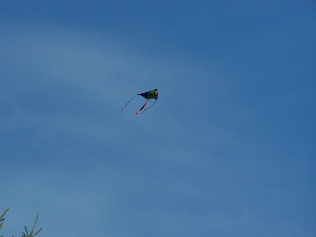 Kite high in the Blue Sky Baddeck, Nova Scotia Canada