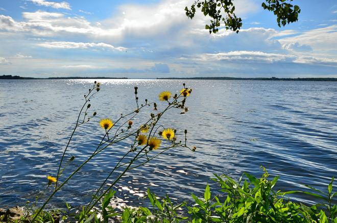"Wildflowers over ""The Bay Of Quinte"" Belleville, Ontario Canada"