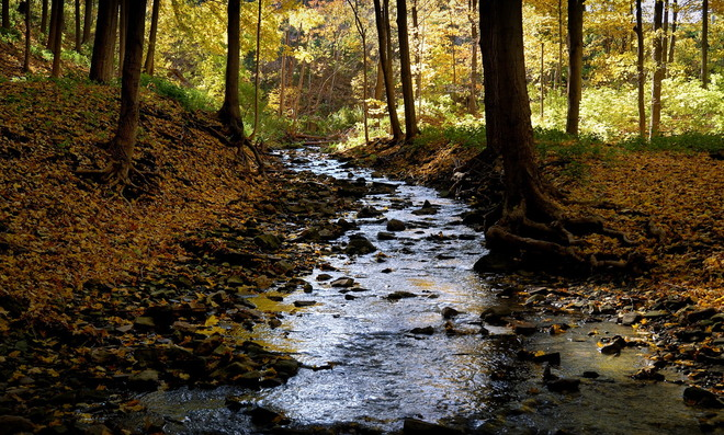A Creek by the Bruce Trail Hamilton, Ontario Canada