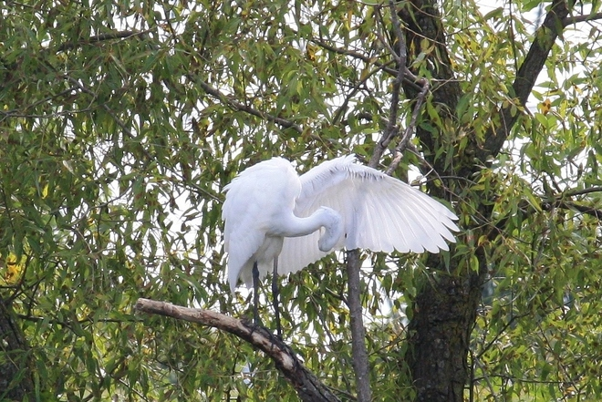 EGRET PRUNING N TREE Scarborough, Ontario Canada