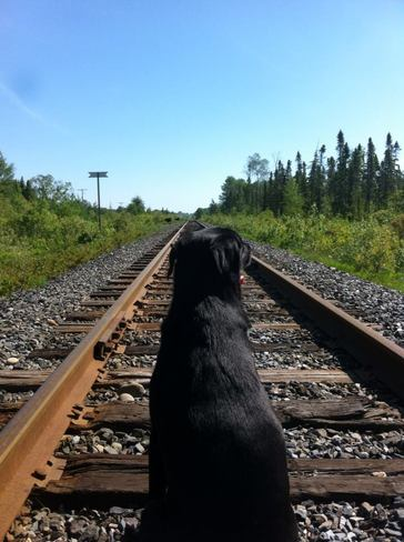Waiting for the train Hoyle, Ontario Canada
