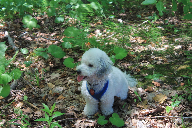 Toby Hiking the Beiner Woodland Trail Port Elgin, Ontario Canada