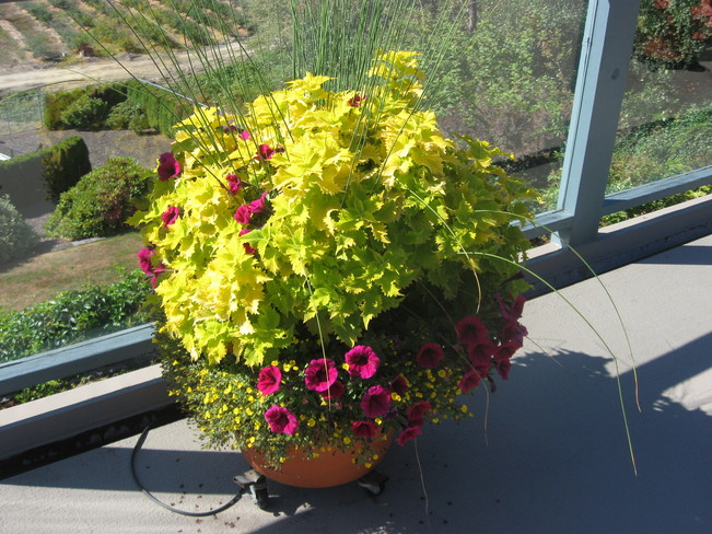 colourful pot Surrey, British Columbia Canada