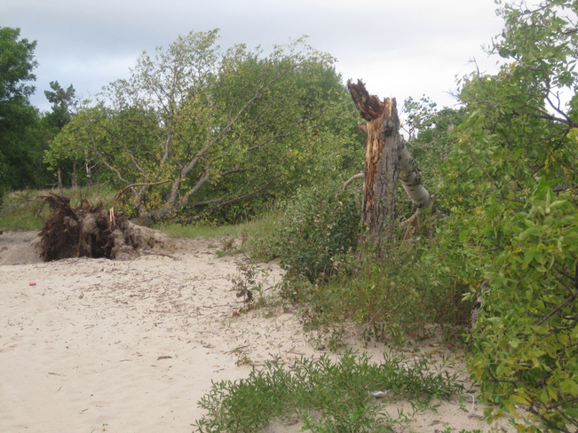 Beach Front Destroyed By Series of Storms Fort Alexander 3, Manitoba Canada