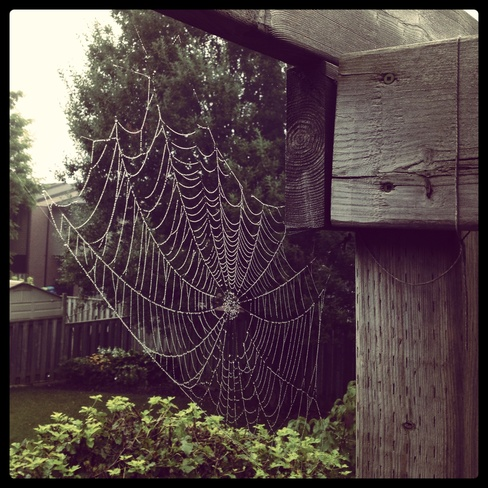 bejeweled spiders web St. Thomas, Ontario Canada