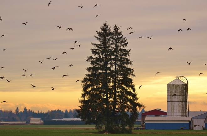 Sunset on the farm Maple Ridge, British Columbia Canada