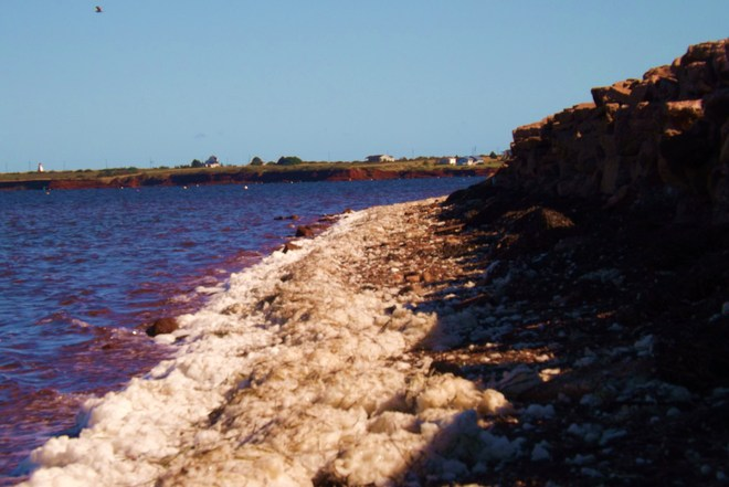 sea foam shore Lower Darnley, Prince Edward Island Canada