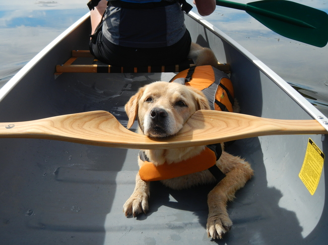 Canoeing with the Dog Williams Lake, British Columbia Canada