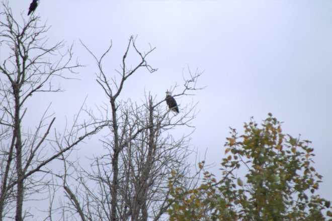 Crow & Eagle Timmins, Ontario Canada
