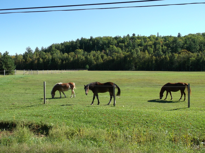 Nice Horses On Lee Valley Road Massey, Ontario Canada
