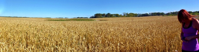 Fields Of Gold Yorkton, Saskatchewan Canada