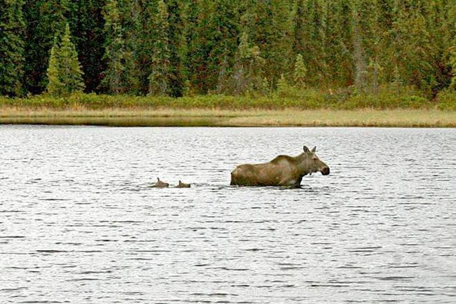 Mom leads the way Algonquin, Ontario Canada